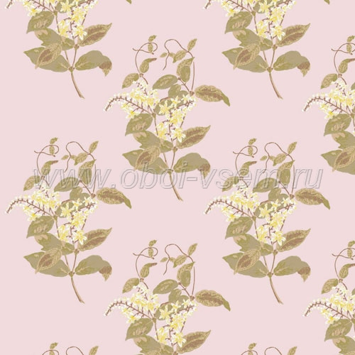 Обои  81/6025 A Collection of Flowers (Cole & Son)